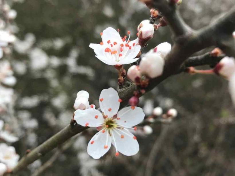 fleur HAIKU